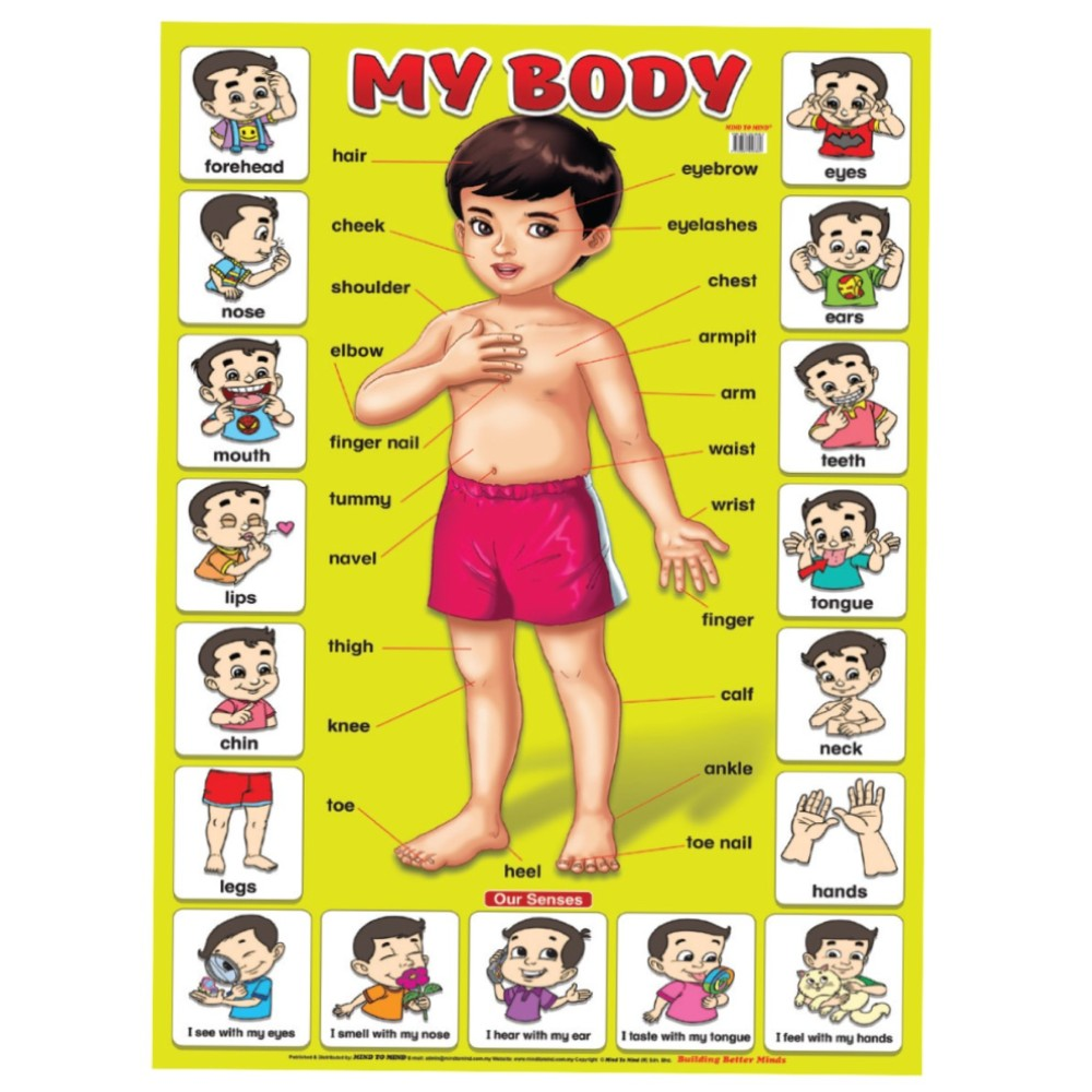 Educational Chart My Body (MM58389)